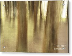 Nature Abstract Acrylic Print by Gaspar Avila