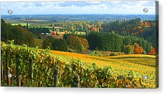 Oregon Wine Country Acrylic Print by Margaret Hood