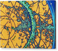 Particle Tracks Acrylic Print by Patrice Loiez, Cern