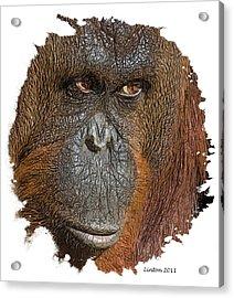 Pensive Primate Acrylic Print