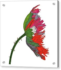 Pin Ink Water Color Acrylic Print by Jay Pumphrey Jr