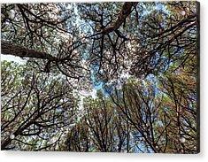 Pinewood Forest, Cecina, Tuscany, Italy Acrylic Print by Elenarts - Elena Duvernay photo