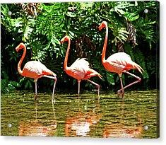 3 Pink Flamingos Acrylic Print