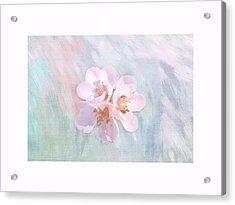 Quince Art Acrylic Print