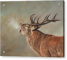 Acrylic Print featuring the painting Red Deer Stag by David Stribbling