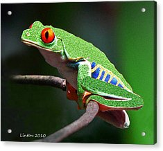 Red-eyed Leaf Frog Acrylic Print by Larry Linton