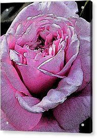 Rose Acrylic Print by Michele Caporaso