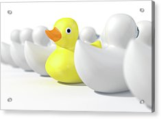 Rubber Duck Against The Flow Acrylic Print by Allan Swart