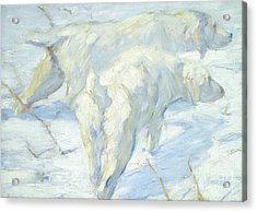 Siberian Dogs In The Snow Acrylic Print