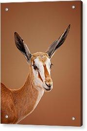 Springbok Portrait Acrylic Print by Johan Swanepoel