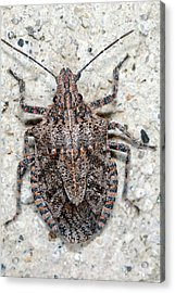 Acrylic Print featuring the photograph Stink Bug by Breck Bartholomew