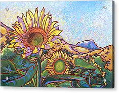 3 Sunflowers Acrylic Print by Nadi Spencer