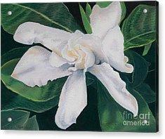 White Camelia Acrylic Print by Lucinda  Hansen