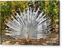 White Peacock With Open Tail Acrylic Print by George Atsametakis