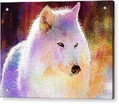 Wolf Acrylic Print by Elena Kosvincheva