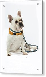 3010.068 Therapet Acrylic Print by M K  Miller