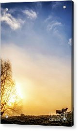 Acrylic Print featuring the photograph Misty Mountain Sunrise by Thomas R Fletcher