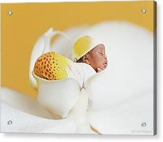 Telayiah In A Moth Orchid Acrylic Print