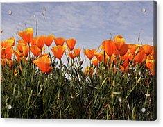 Flowers  Acrylic Print by Luke Robertson