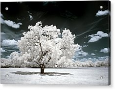 Acrylic Print featuring the photograph 39 by Mike Irwin
