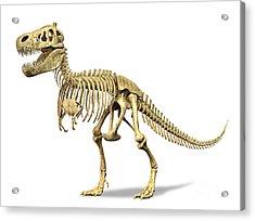 3d Rendering Of A Tyrannosaurus Rex Acrylic Print by Leonello Calvetti