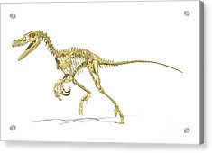 3d Rendering Of A Velociraptor Dinosaur Acrylic Print by Leonello Calvetti