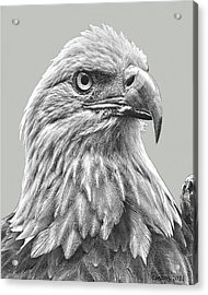 American Bald Eagle Acrylic Print by Larry Linton