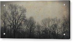 Bare Branch Horizon Acrylic Print by JAMART Photography