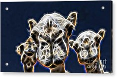 Camel Collection Acrylic Print