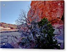 Canyonland N.p. Acrylic Print by Larry Gohl