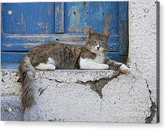 Cat In A Doorway, Greece Acrylic Print by Jean-Louis Klein & Marie-Luce Hubert