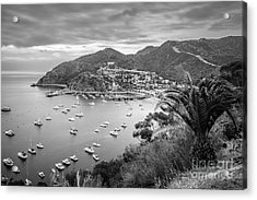 Catalina Island Avalon Bay Black And White Picture Acrylic Print by Paul Velgos