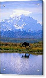 Denali National Park Acrylic Print by John Hyde - Printscapes