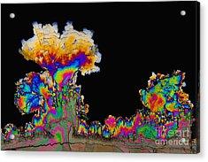 Dopamine Hydrochloride, Polarized Lm Acrylic Print by Antonio Romero