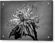 Floral Still Life Acrylic Print by Robert Ullmann