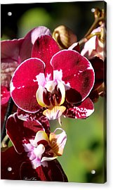 Flower Edition Acrylic Print