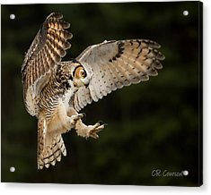 Great Horned Owl Acrylic Print by CR Courson