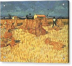 Harvest In Provence Acrylic Print
