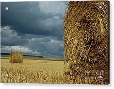 Hay Bales In Harvested Corn Field Acrylic Print by Sami Sarkis