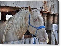 Horse Acrylic Print by Savannah Gibbs