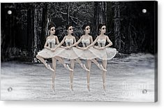4 Little Swans Acrylic Print by Methune Hively
