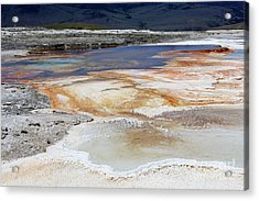 Mammoth Hot Springs Upper Terraces In Yellowstone National Park Acrylic Print by Louise Heusinkveld