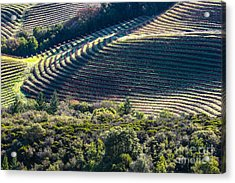 Napa Valley, California Acrylic Print by Richard Smukler