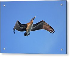 Acrylic Print featuring the photograph 4- Pelican by Joseph Keane