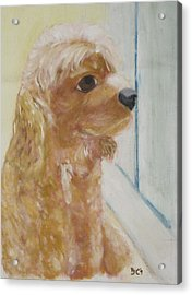 Rusty Aka Digger Dog Acrylic Print by Patricia Cleasby