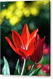 Spring Garden Acrylic Print by Miguel Winterpacht