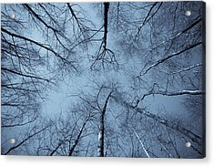 Trees In Epping Forest Acrylic Print
