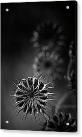 432 Hz Acrylic Print by Matthew Blum