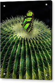 Acrylic Print featuring the photograph 4409 by Peter Holme III