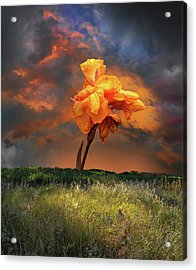 Acrylic Print featuring the photograph 4490 by Peter Holme III